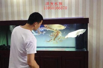 紫竹路聚业典当行 杨总办公室 鱼缸和龙鱼