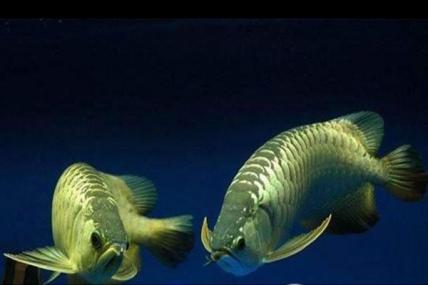 昆山金龙鱼
