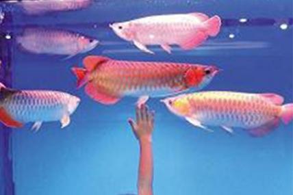 昆山鱼缸价格